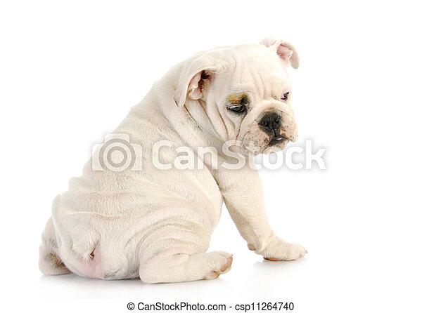 puppy looking over shoulder - csp11264740