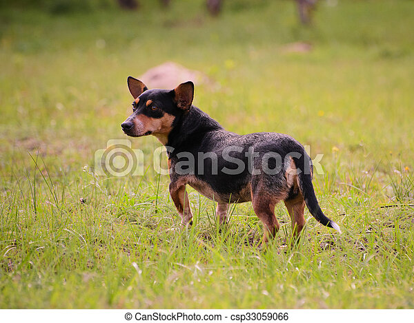 Puppy standing in the grass outdoors - csp33059066