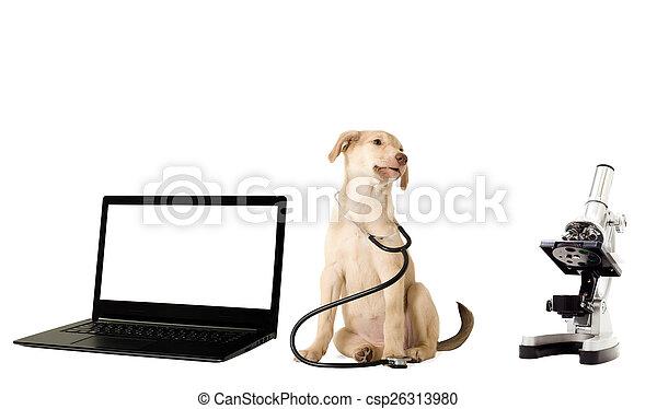 puppy vet - csp26313980