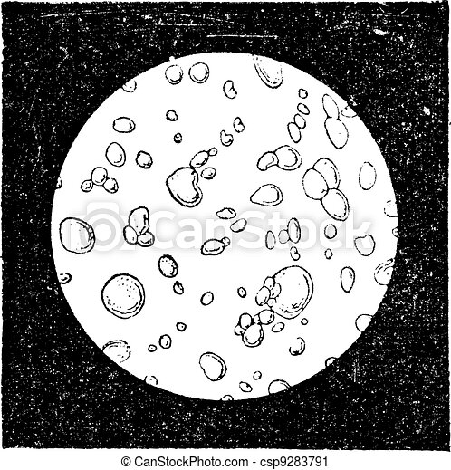 Pure milk seen under a microscope, vintage engraving. - csp9283791