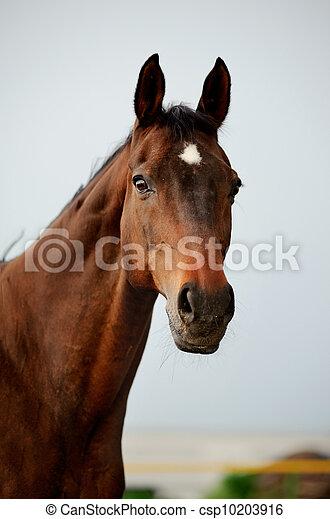 purebred horse - csp10203916