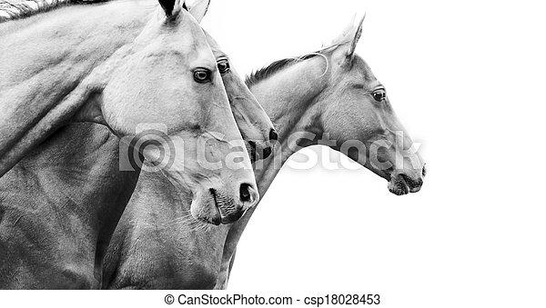 purebred horses - csp18028453