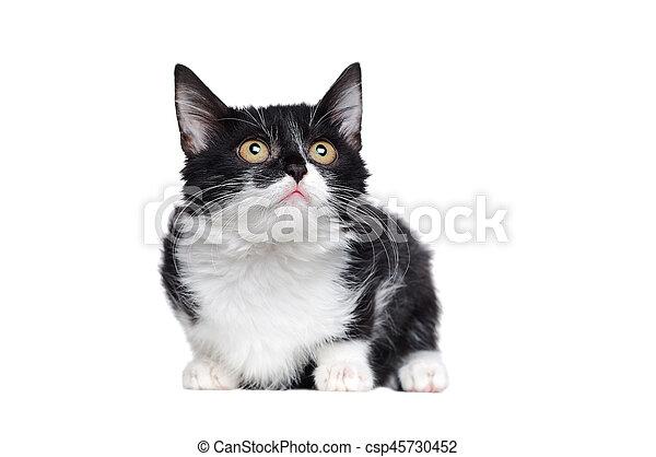 Un retrato lateral de un gatito blanco y negro sentado - csp45730452