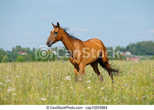 purebred, paarde, akker - csp10203864