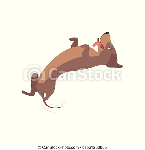 Purebred playful brown dachshund dog lying on his back vector Illustration on a white background - csp61280855