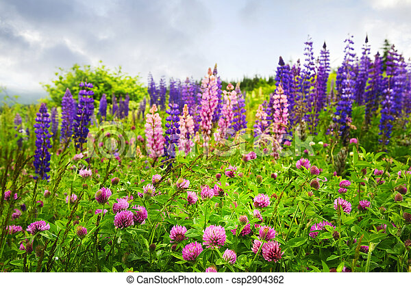Purple and pink wildflowers purple and pink clover and stock purple and pink wildflowers csp2904362 mightylinksfo