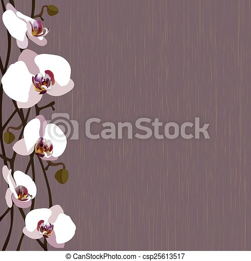 Purple background with white orchid flowers, stems and buds - csp25613517