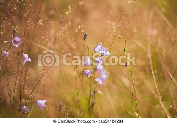 Purple bells growing in the field - csp54184284