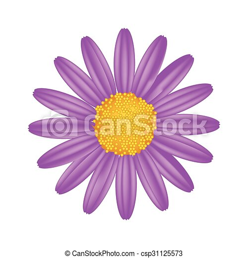 Purple Daisy Flower On A White Background Symbol Of Love Bright