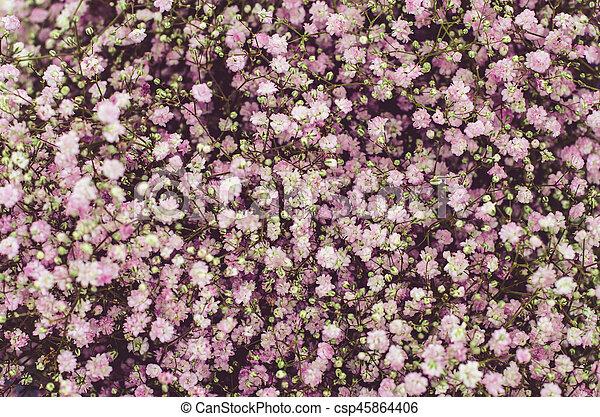 purple dried flowers - csp45864406