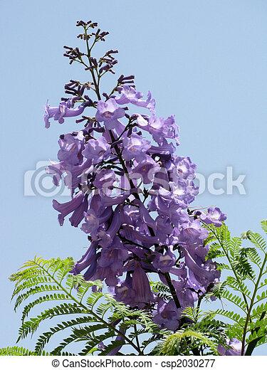 Purple flower 2 - csp2030277