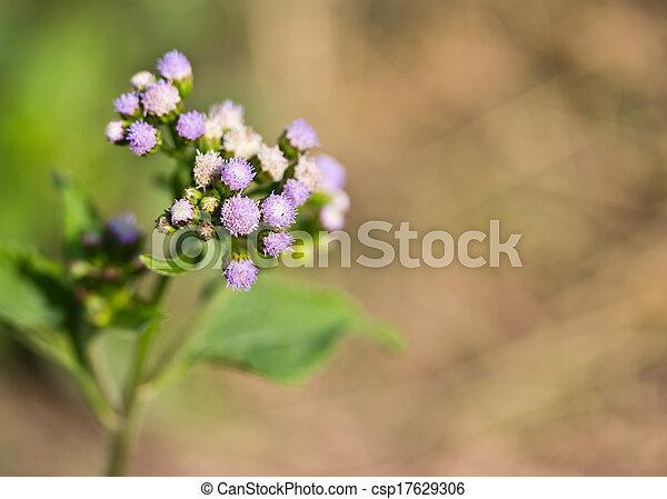 Purple Flower A Single Green Stem With Tiny Little Purple Flowers