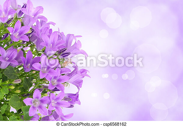 Purple Flower Background Beautiful Purple Background With Campanula