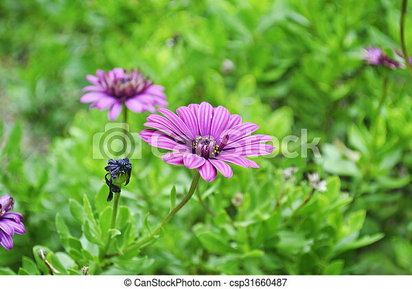 purple flower in the nature - csp31660487