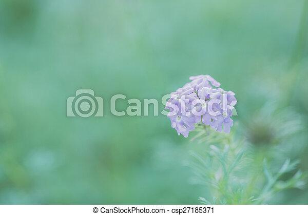 Purple flower - csp27185371