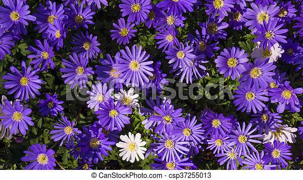 Purple Flower - csp37255013