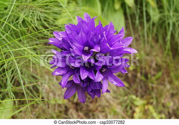 Purple flower - csp33077282