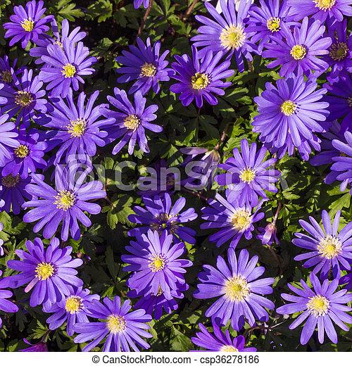 Purple Flower - csp36278186