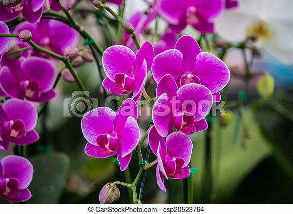 Purple flower - csp20523764