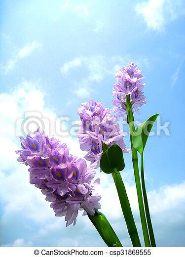 purple flower - csp31869555