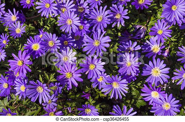 Purple Flower - csp36426455