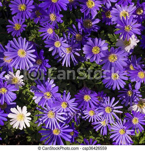 Purple Flower - csp36426559