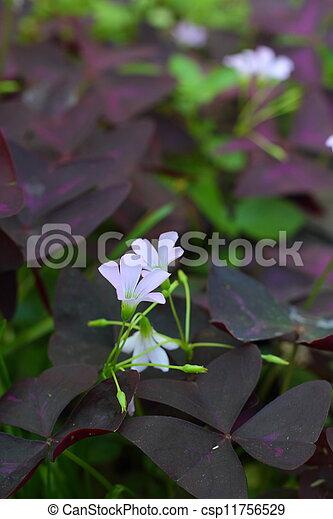Purple flower - csp11756529
