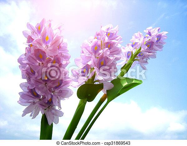purple flower - csp31869543