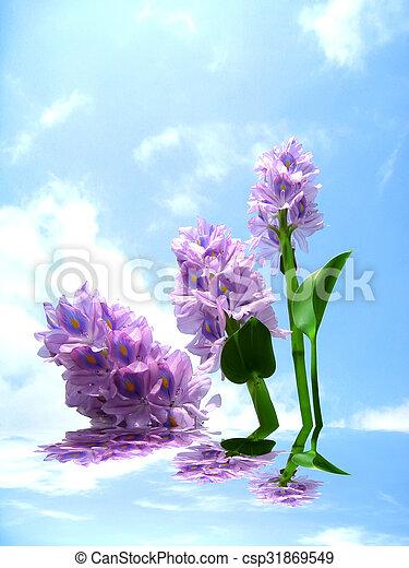 purple flower - csp31869549