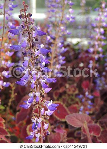 Purple flower - csp41249721