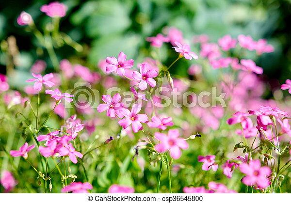 Purple flower - csp36545800