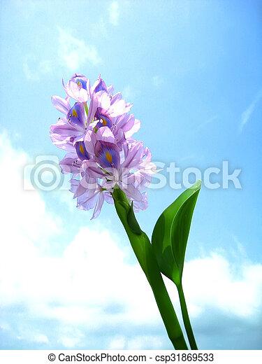 purple flower - csp31869533