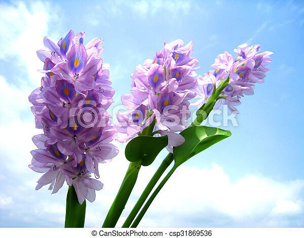 purple flower - csp31869536
