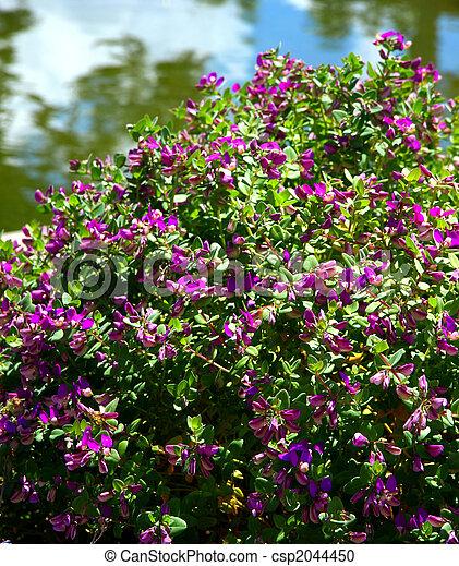 Purple flowering bush a colorful bush with purple flowers stock purple flowering bush csp2044450 mightylinksfo
