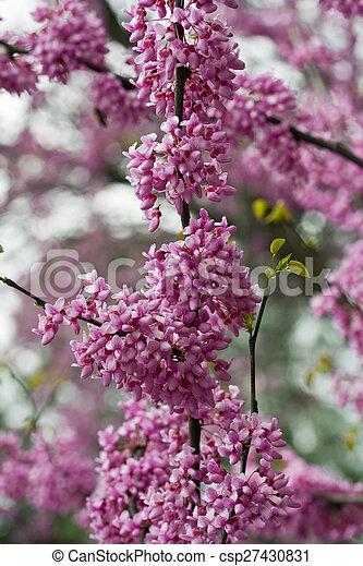 Purple Flowering Tree Sprig Of Flowering Tree Spring Tender And