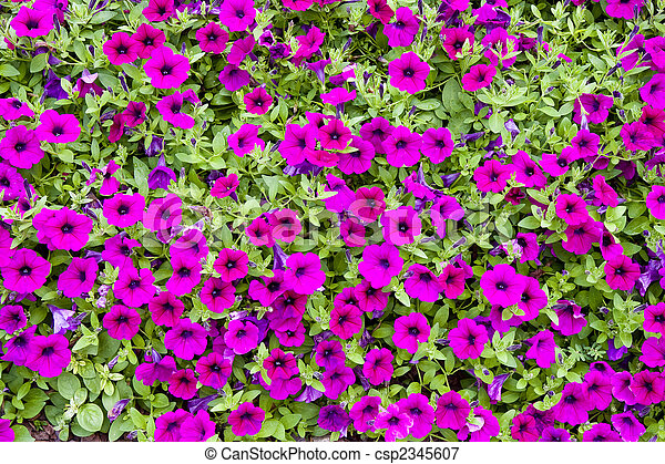Purple flowers in ground cover a dense lush ground cover purple flowers in ground cover csp2345607 mightylinksfo Image collections