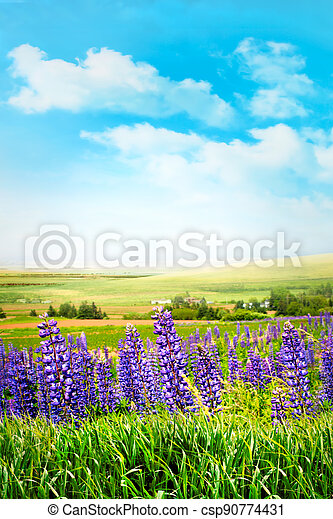 Purple flowers in tall grass against a summer sky - csp90774431