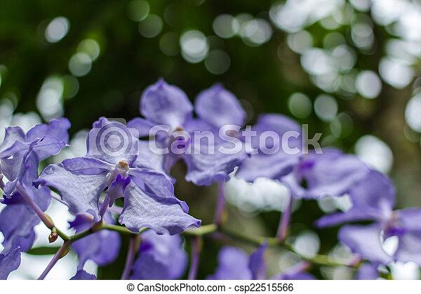 purple flowers in wild nature - csp22515566
