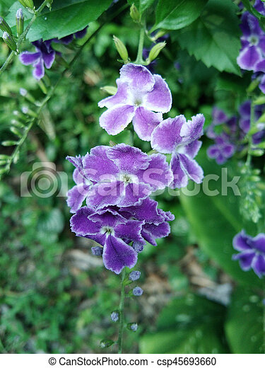 purple flowers in wild nature - csp45693660
