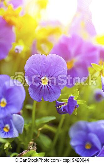 Purple flowers in wild nature - csp19420644