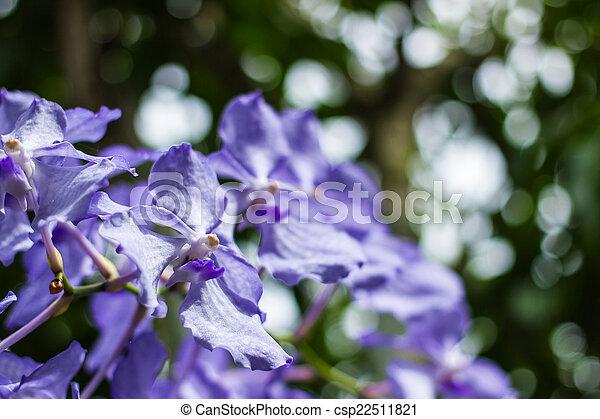purple flowers in wild nature - csp22511821