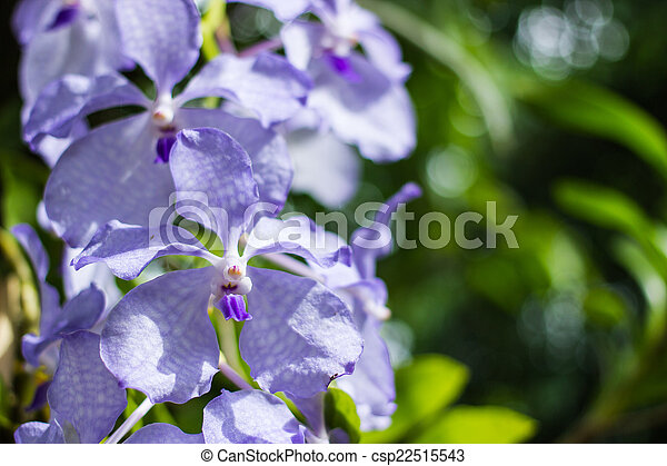 purple flowers in wild nature - csp22515543