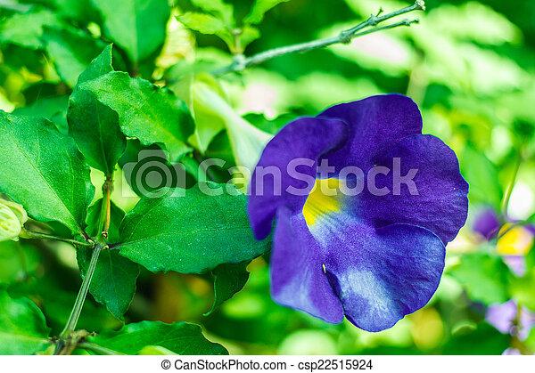 purple flowers in wild nature - csp22515924