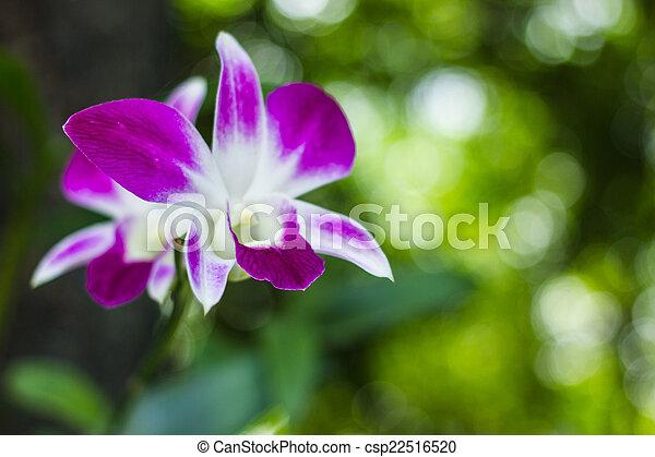 purple flowers in wild nature - csp22516520