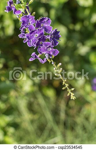 purple flowers in wild nature - csp23534545