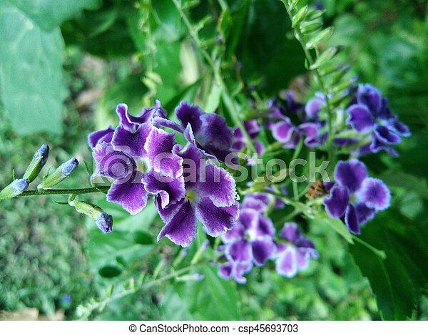 purple flowers in wild nature - csp45693703