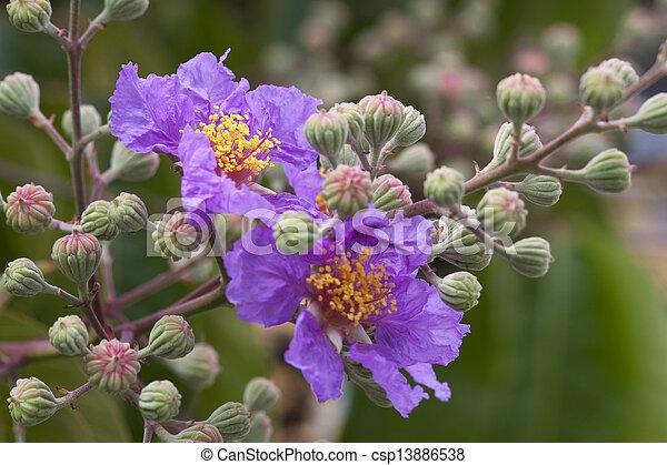 purple flowers in wild nature - csp13886538