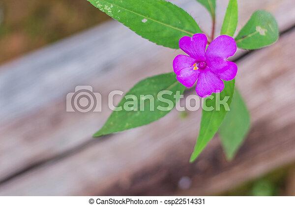 purple flowers in wild nature - csp22514331