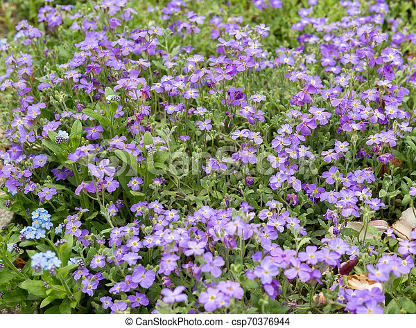 Purple Flowers Of Lobelia Detail Of Lobelia Purple Flowers With Green Leaves,Best Bedroom Air Purifier For Mold