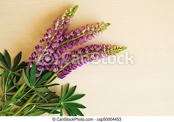 Purple flowers of lythrum with leaves on the white stock images purple flowers of lythrum with leaves on the white background toned csp50004453 mightylinksfo Choice Image